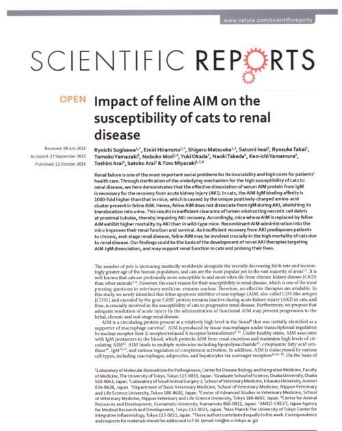 AIMと猫の腎障害.jpg