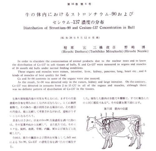 牛の身体の放射性物質.jpg