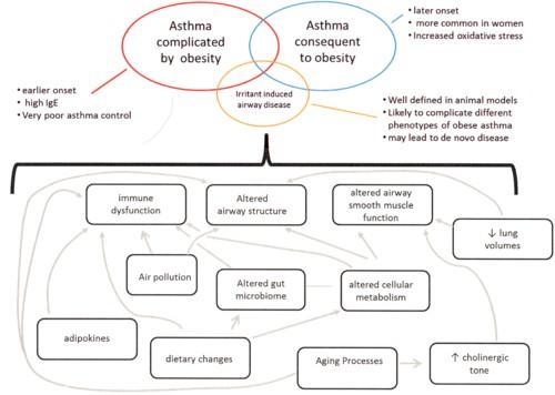 肥満喘息のメカニズムの図.jpg
