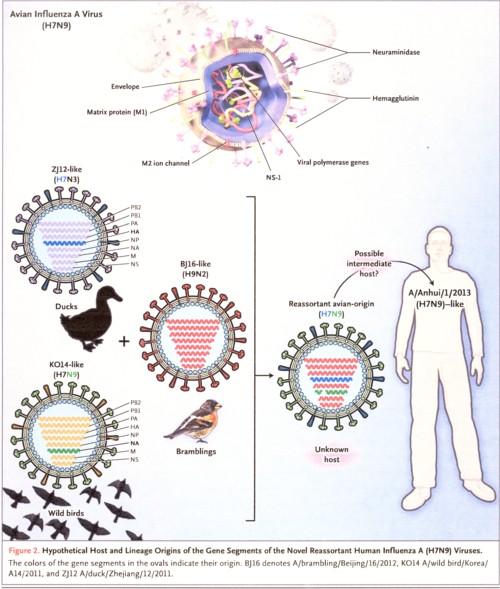 H7N9ウイルスの構造.jpg