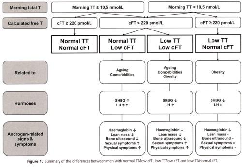 テストステロン値と診断の図.jpg