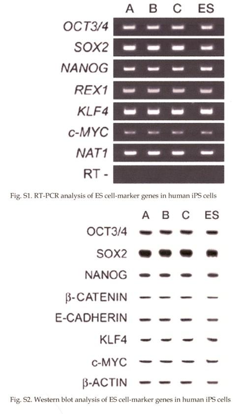 PCRとWBの捏造.jpg